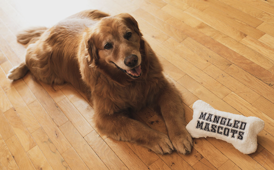 Golden Retriever with Mangled Mascot Toy